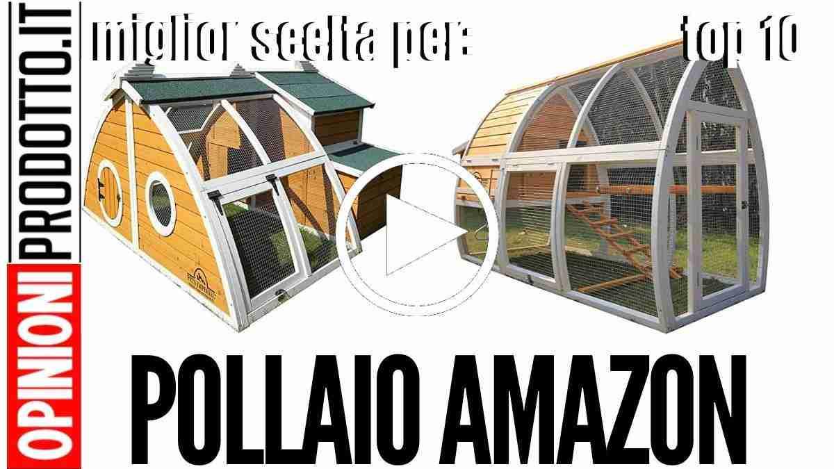Migliore Pollaio Amazon: uova fresche a gogo